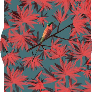C_bird_S